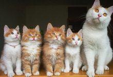 Animierte Katzenbilder 220x150 - Animierte Katzenbilder