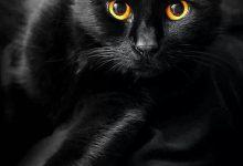 Außergewöhnliche Katzen Kaufen 220x150 - Außergewöhnliche Katzen Kaufen