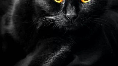 Außergewöhnliche Katzen Kaufen 390x220 - Außergewöhnliche Katzen Kaufen