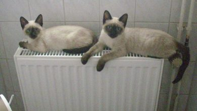 Ausmalbilder Süße Katzen 390x220 - Ausmalbilder Süße Katzen