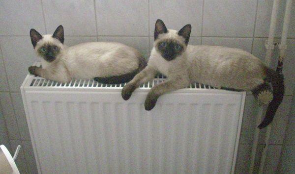 Ausmalbilder Süße Katzen - Ausmalbilder Süße Katzen
