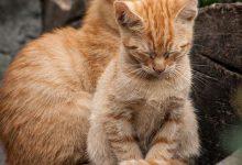 Ausmalbilder Tiere Katzen 220x150 - Ausmalbilder Tiere Katzen