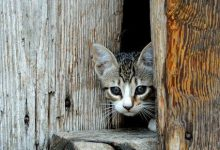 Awesome Cat Pics Bilder 220x150 - Awesome Cat Pics Bilder