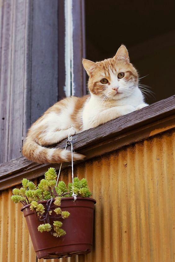 Baby Cat Photo Gallery Bilder - Baby Cat Photo Gallery Bilder
