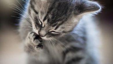 Baby Katzen 390x220 - Baby Katzen