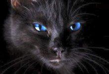 Baby Katzen Bilder 220x150 - Baby Katzen Bilder