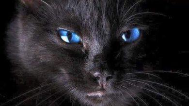 Baby Katzen Bilder 390x220 - Baby Katzen Bilder