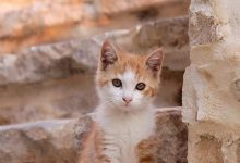 Baby Katzen Hintergrundbilder 220x150 - Baby Katzen Hintergrundbilder