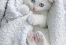 Beautiful Cat Pictures Free Download Bilder 220x150 - Beautiful Cat Pictures Free Download Bilder