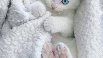 Beautiful Cat Pictures Free Download Bilder 390x220 - Beautiful Cat Pictures Free Download Bilder