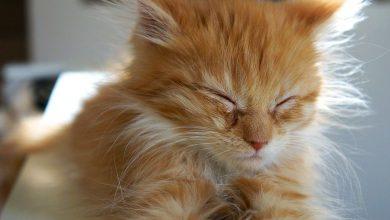 Beautiful Cute Cats Photos Bilder 390x220 - Beautiful Cute Cats Photos Bilder
