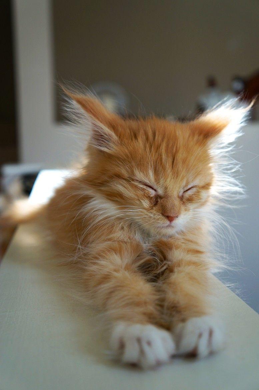 Beautiful Cute Cats Photos Bilder - Beautiful Cute Cats Photos Bilder