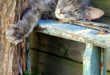Beauty Cat Images Bilder 220x150 - Beauty Cat Images Bilder