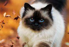 Bengal Katze Bilder 220x150 - Bengal Katze Bilder