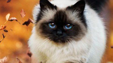 Bengal Katze Bilder 390x220 - Bengal Katze Bilder
