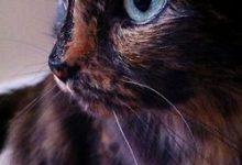 Berühmte Gemälde Katzen 220x150 - Berühmte Gemälde Katzen