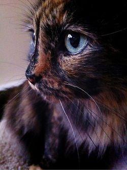 Berühmte Gemälde Katzen - Berühmte Gemälde Katzen