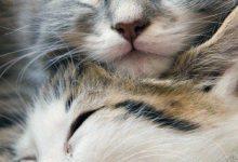 Berühmte Katzenbilder 220x150 - Berühmte Katzenbilder