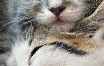 Berühmte Katzenbilder 348x220 - Berühmte Katzenbilder