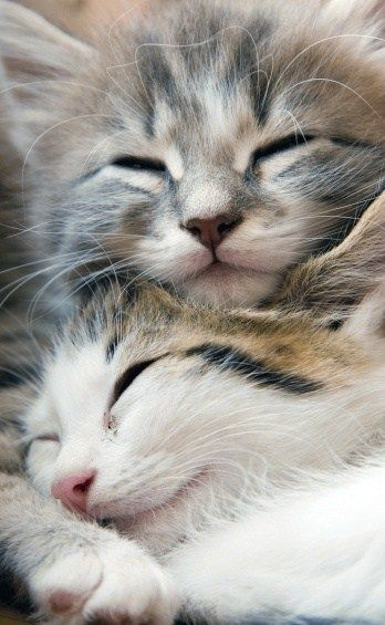 Berühmte Katzenbilder - Berühmte Katzenbilder