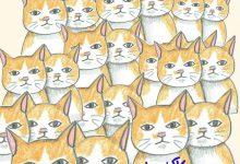 Best Cat Photos Bilder 220x150 - Best Cat Photos Bilder