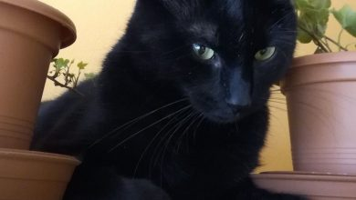 Best Cat Pics Bilder 390x220 - Best Cat Pics Bilder