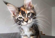 Best Cat Picture Ever Bilder 220x150 - Best Cat Picture Ever Bilder
