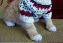 Best Cat Pictures Bilder 220x150 - Best Cat Pictures Bilder