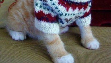 Best Cat Pictures Bilder 390x220 - Best Cat Pictures Bilder