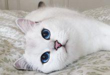 Best Funny Cat Pictures Bilder 220x150 - Best Funny Cat Pictures Bilder