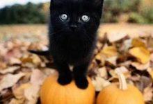 Bild Einer Katze 220x150 - Bild Einer Katze
