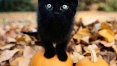 Bild Einer Katze 390x220 - Bild Einer Katze