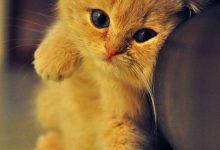 Bild Einer Katze Bilder Kostenlos 220x150 - Bild Einer Katze Bilder Kostenlos