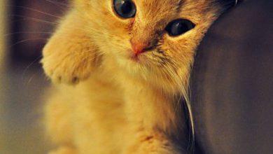 Bild Einer Katze Bilder Kostenlos 390x220 - Bild Einer Katze Bilder Kostenlos
