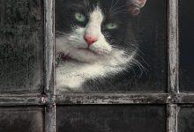 Bild Katze Gemalt 220x150 - Bild Katze Gemalt