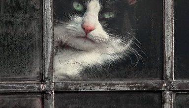 Bild Katze Gemalt 384x220 - Bild Katze Gemalt