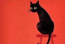Bild Katze Schwarz Weiß 220x150 - Bild Katze Schwarz Weiß