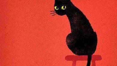 Bild Katze Schwarz Weiß 390x220 - Bild Katze Schwarz Weiß