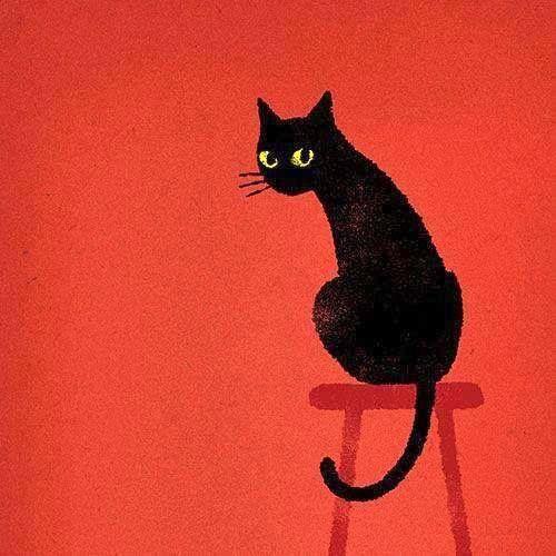 Bild Katze Schwarz Weiß - Bild Katze Schwarz Weiß