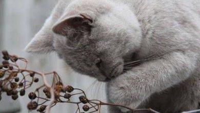 Bild Wo Ist Die Katze 390x220 - Bild Wo Ist Die Katze