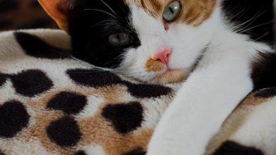 Bilder Über Katzen 390x220 - Bilder Über Katzen