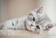 Bilder Für Katzen 220x150 - Bilder Für Katzen