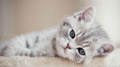 Bilder Für Katzen 390x220 - Bilder Für Katzen