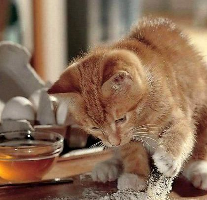 Herzlichen Gluckwunsch Zum Geburtstag Katze Weisses Fell Xl