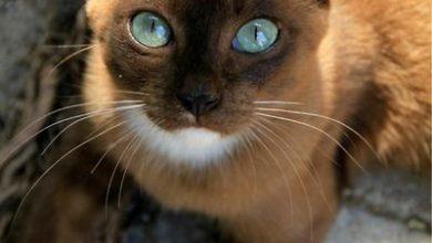Bilder Geburtstag Katze Bilder Kostenlos 390x220 - Bilder Geburtstag Katze Bilder Kostenlos