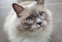 Bilder Kätzchen 220x150 - Bilder Kätzchen