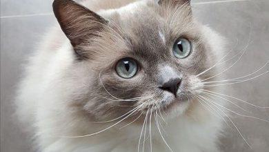 Bilder Kätzchen 390x220 - Bilder Kätzchen