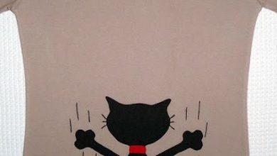 Bilder Katzen 390x220 - Bilder Katzen