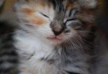 Bilder Katzen Kostenlos 220x150 - Bilder Katzen Kostenlos