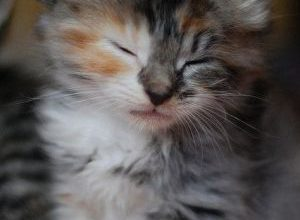 Bilder Katzen Kostenlos 300x220 - Bilder Katzen Kostenlos